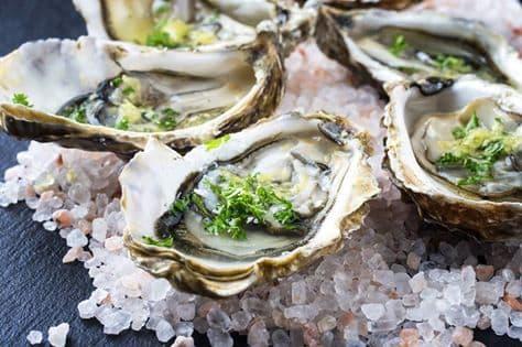 oyster san jose del cabo